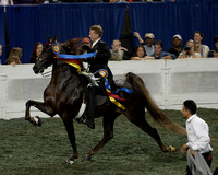 World's Championship Horse Show (KSF) Photos NOT color corrected or cropped. .