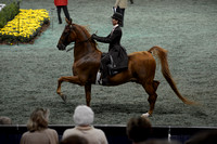 223 ASB Adult Three-Gaited Country Pleasure Championship