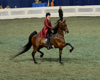 228 ASB Junior Exhibitor Park Horse Three-Gaited Championship
