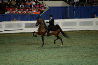 232 ASB Park Three-Gaited Championship