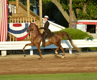 4 .....Junior Exhibitor Three-Gaited Country Pleasure