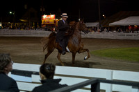 21. JUNIOR FIVE GAITED MARE