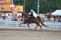 83. AMATEUR FIVE GAITED CHAMPIONSHIP