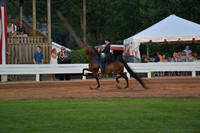 22. 3- Gaited Park Amateur