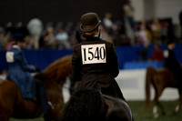 221 ASB Junior Exhibitor Three-Gaited Country Pleasure
