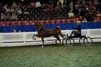225 ASR National Three-Year-Old Futurity - Three-Gaited Park