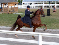 Class 21 3-Gaited Full Mane and Tail