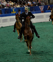 3 ASR Sweepstakes Four-Year-Old Three-Gaited