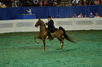 51A Junior Five-Gaited Division II