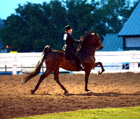 Class 42 ASB Adult 5-Gaited Pleasure