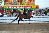 61. AMATEUR THREE GAITED CHAMPIONSHIP