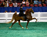 15 Kentucky County Fair Five-Gaited Championship