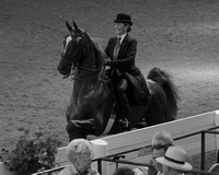 51 ....Three-Gaited Show Pleasure Adult Championship