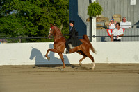 78 UPHA Three- Year-Old Three-Gaited Classic
