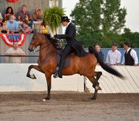 85 UPHA Three Year Old Five-Gaited Classic