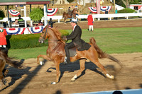 1.....Five-Gaited Amateur