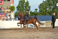 83 Amateur Five-Gaited Championship
