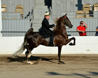 American Road Horse and Pony Show- At the show classes were added that were not on internet class list Not sure of class numbers