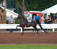 36 ....Three-Gaited Country Pleasure Adult