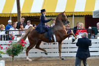5. AMATEUR THREE GAITED OVER 15.2