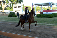 Class 31 Ladies 3-Gaited Mare or Gelding