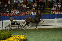 102 ASR National Three-Year-Old Futurity - Fine Harness