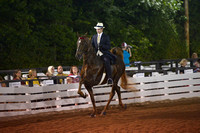 21. FIVE GAITED - LIMIT HORSE