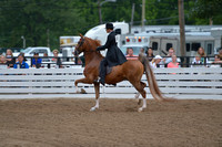 29. FIVE GAITED SHOW PLEASURE - LIMIT HORSE