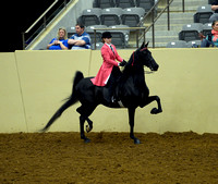 76. Pleasure WalkTrot only – rider 12 and under