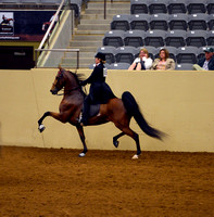 81.  Amateur Five Gaited Stake