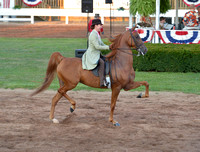 8 .....Adult Three-Gaited Country Pleasure