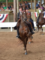 29. 3-Gaited Park Amateur