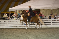 40. JUNIOR FIVE GAITED STALLION:GELDING