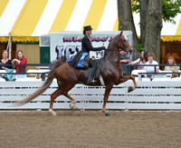 23. Ladies Three-Gaited - Over 15.2